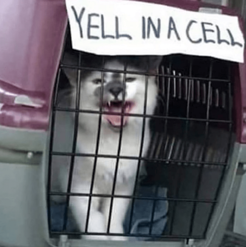 caturday meme with pic of a cat screaming inside a carrier