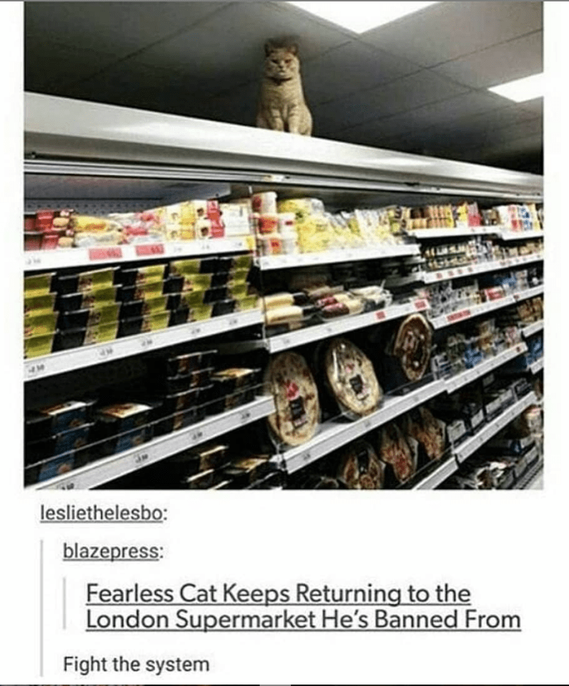caturday meme with headline about a cat invading a supermarket