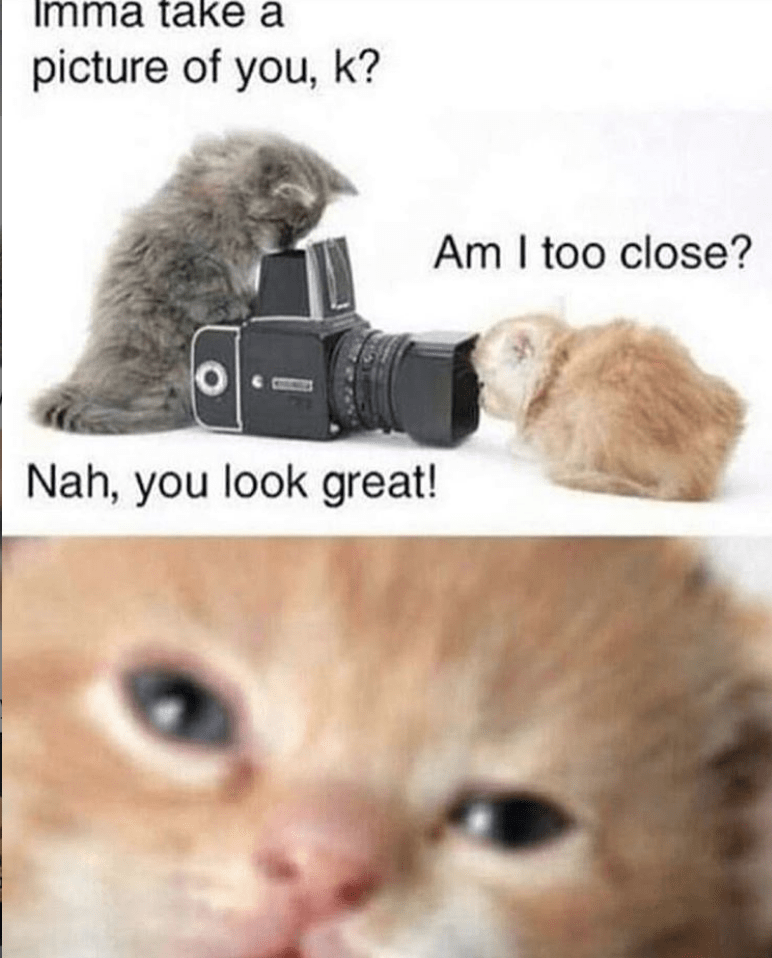 caturday meme about cats taking pics