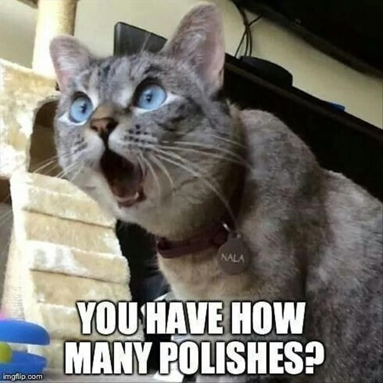 caturday meme with a cat shocked by the number of nail polish you own