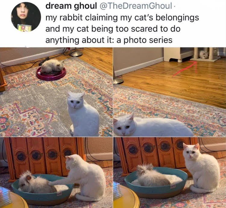 caturday meme with series of photos showing a rabbit taking over a cat's bed