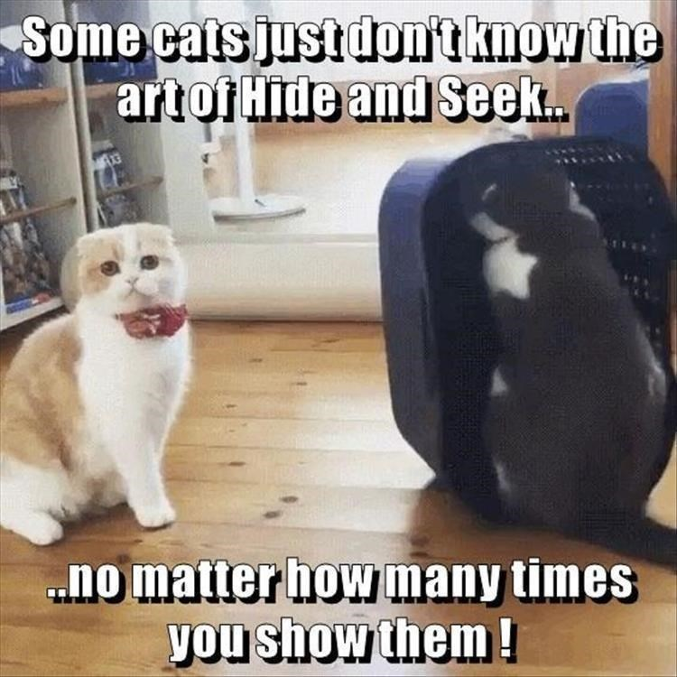 caturday meme about a cat that doesn't know how to play hide and seek