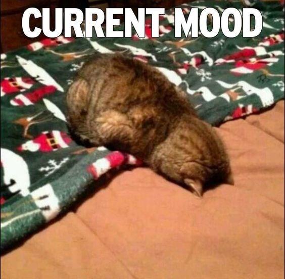 Cat - CURRENT MOOD
