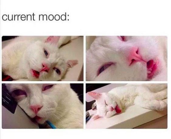 Cat - current mood: