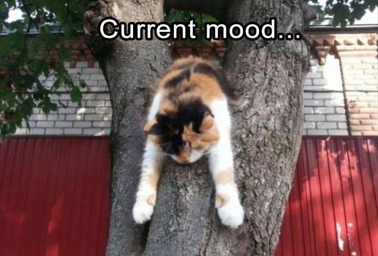 Cat - Current mood.