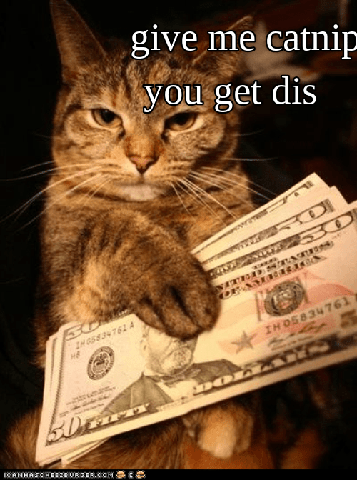 catnip money cat memes cash - 9271049472