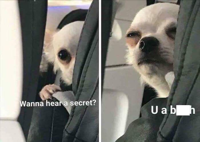 Dog - Wanna heara secret? U a b h