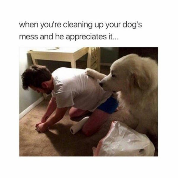 Dog - when you're cleaning up your dog's mess and he appreciates it...