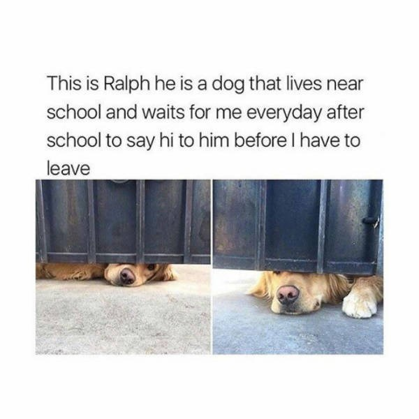 Dog - This is Ralph he is a dog that lives near school and waits for me everyday after school to say hi to him before I have to leave