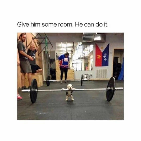 """Caption that reads, """"Give him some room. He can do it"""" above a pic of a little puppy behind a barbell with weights on it"""