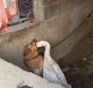 cursed image - Bird