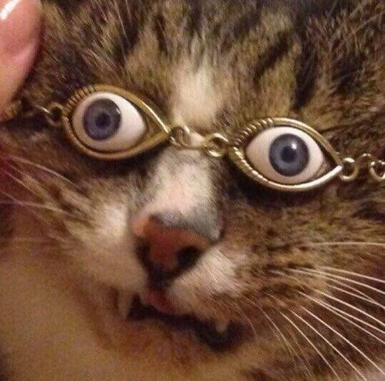 cursed image - cat wearing glasses with eyes on it