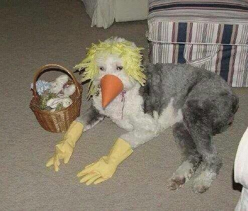 cursed image - Dog wearing a duck costume