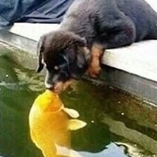 cursed image - puppy kissing fish in water