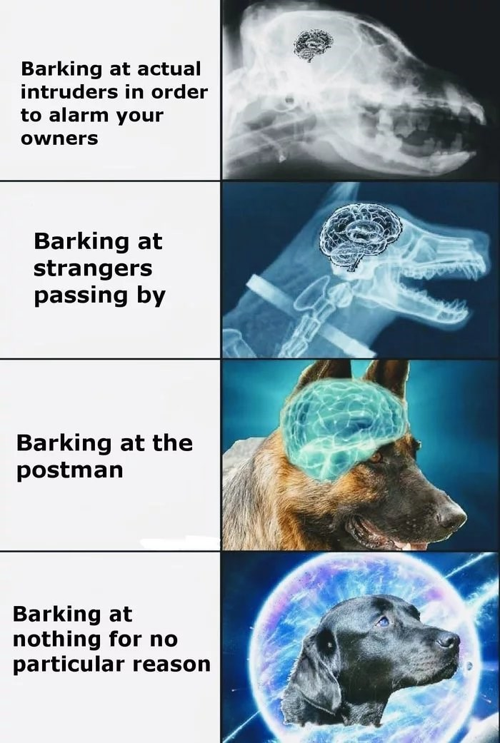 Snout - Barking at actual intruders in order to alarm your Owners Barking at strangers passing by Barking at the postman Barking at nothing for no particular reason