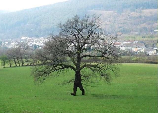 optical illusion - Tree