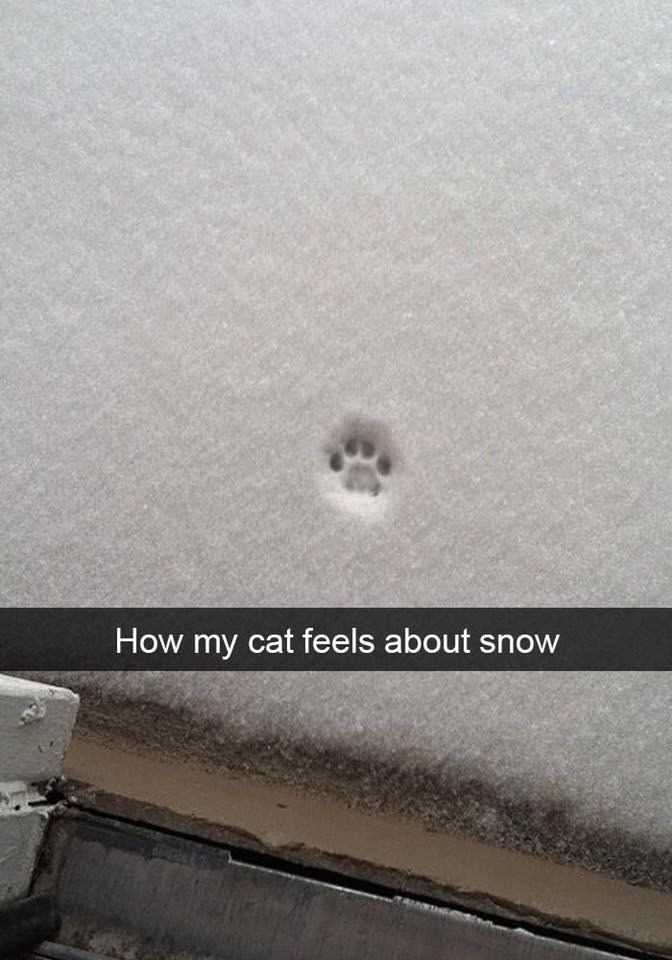 Automotive exterior - How my cat feels about snow