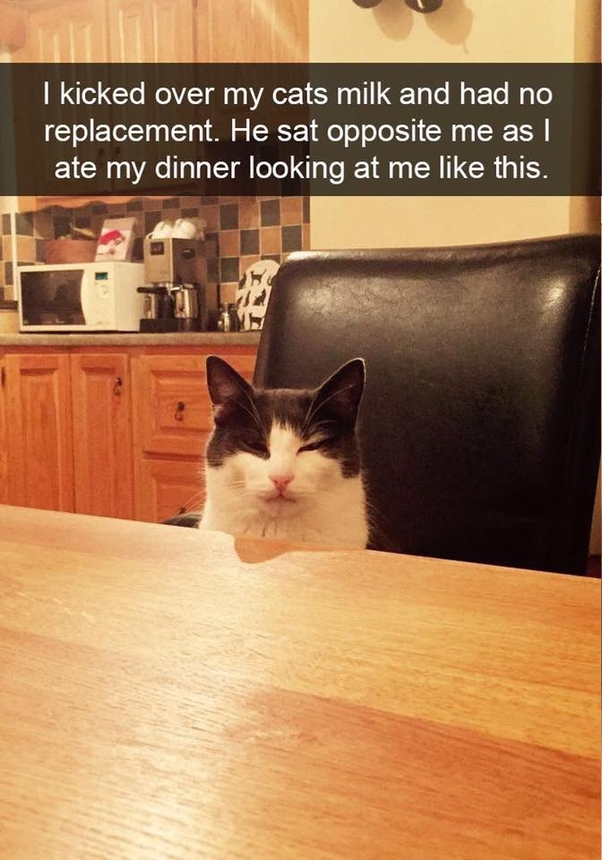 Cat - I kicked over my cats milk and had no replacement. He sat opposite me asl ate my dinner looking at me like this.