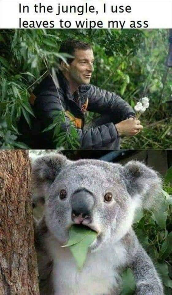 Koala - In the jungle, I use leaves to wipe my ass