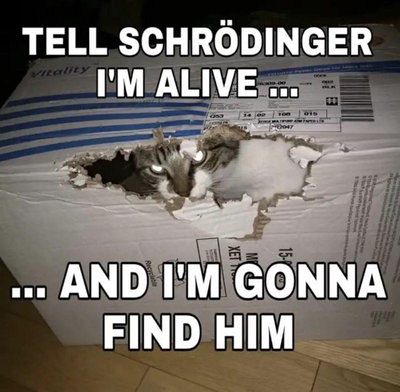 Cheezburger Image 9271564544