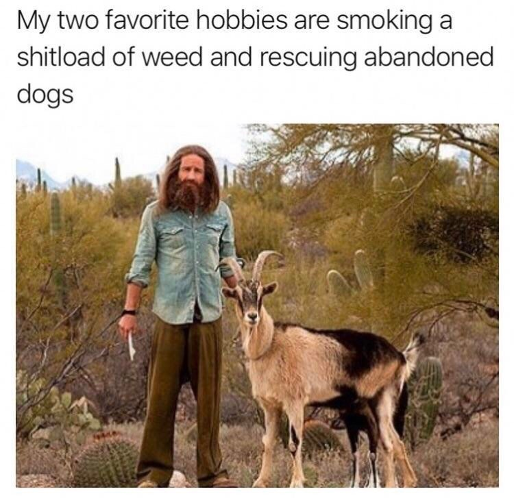 Wildlife - My two favorite hobbies are smoking a shitload of weed and rescuing abandoned dogs