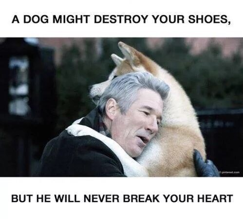 Facial expression - A DOG MIGHT DESTROY YOUR SHOES, pinteest.com BUT HE WILL NEVER BREAK YOUR HEART