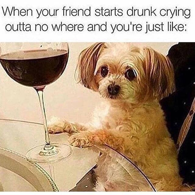 "Caption that reads, ""When your friend starts drunk crying outta nowhere and you're just like..."" above a pic of a little dog looking awkward with a glass of wine"