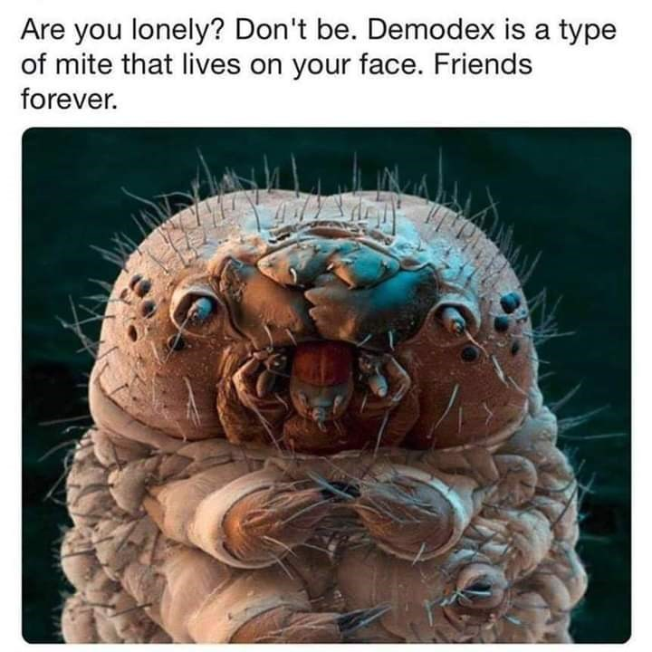 """Caption that reads, """"Are you lonely? Don't be. Demodex is a type of mite that lives on your face. Friends forever"""" above a pic of a microscopic mite"""