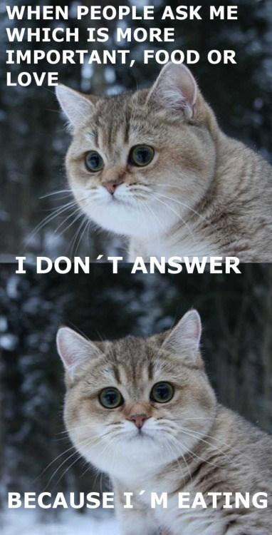 meme - Cat - WHEN PEOPLE ASK ME WHICH IS MORE IMPORTANT, FOOD OR LOVE I DON T ANSWER BECAUSE I M EATING