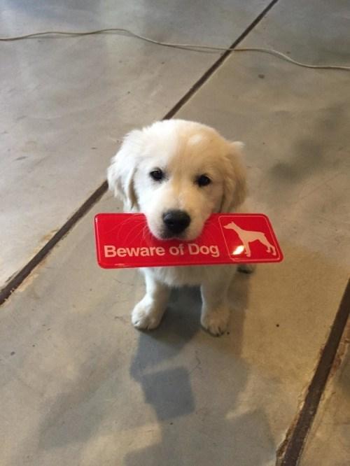 meme - Dog - Beware of Dog