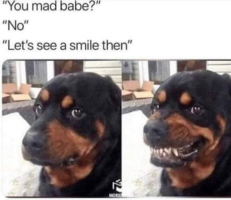 """Dog - """"You mad babe?"""" """"No"""" """"Let's see a smile then"""" MORID"""