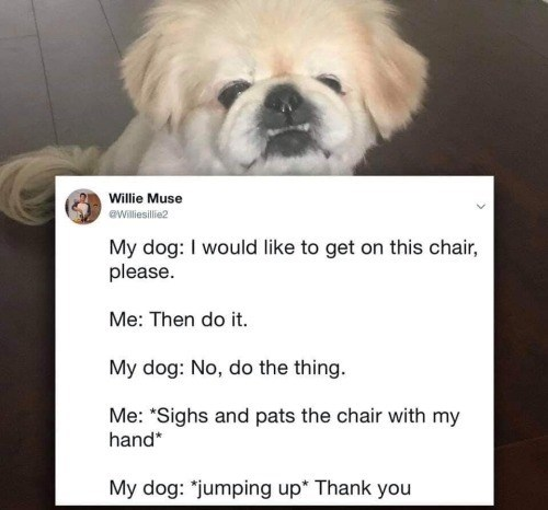 """Dog - Willie Muse eWilliesillie2 My dog: I would like to get on this chair, please. Me: Then do it. My dog: No, do the thing. Me: """"Sighs and pats the chair with my hand* My dog: """"jumping up* Thank you"""