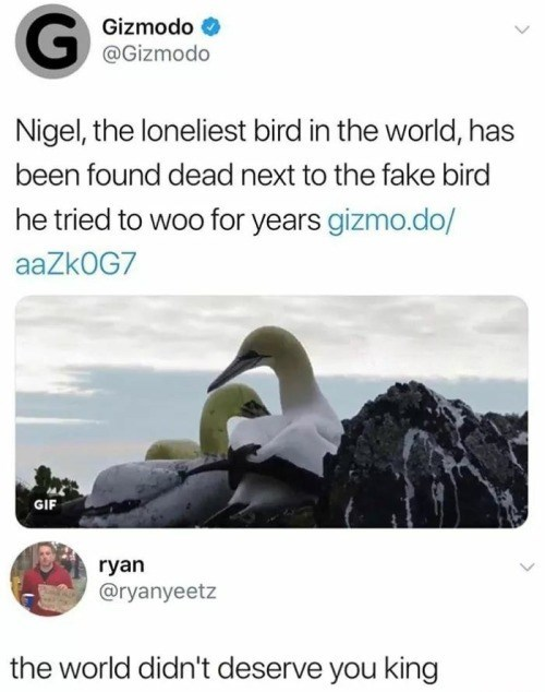 Text - Gizmodo @Gizmodo Nigel, the loneliest bird in the world, has been found dead next to the fake bird he tried to woo for years gizmo.do/ aaZk0G7 GIF ryan @ryanyeetz the world didn't deserve you king