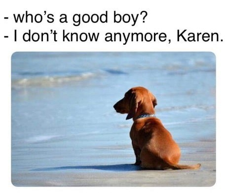 Dog - - who's a good boy? - I don't know anymore, Karen.