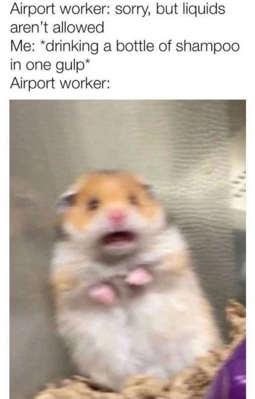 """Hamster - Airport worker: sorry, but liquids aren't allowed Me: """"drinking a bottle of shampoo in one gulp* Airport worker:"""