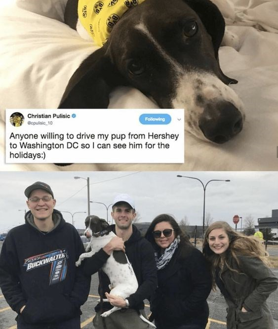 wholesome meme about a dog getting a ride to see its owner