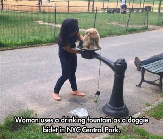 woman washing her dog's butt in a drinking fountain