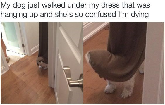 wholesome meme of a dog getting stuck in a dress