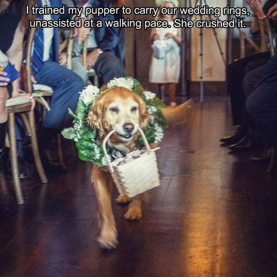 wholesome meme about a ring carrying dog at a wedding