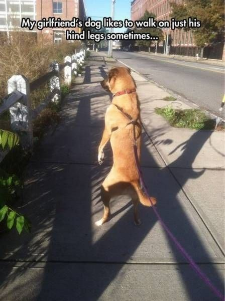 meme of a dog walking like a person
