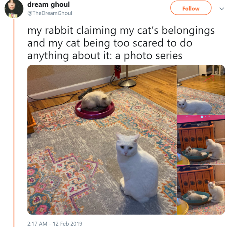 Cat - dream ghoul Follow @TheDreamGhoul my rabbit claiming my cat's belongings and my cat being too scared to do anything about it: a photo series 2:17 AM 12 Feb 2019 >
