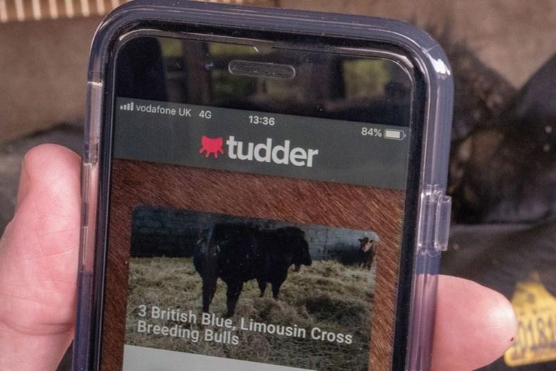Technology - ll vodafone UK 4G 13:36 84% tudder 3 British Blue, Limousin Cross Breeding Bulls