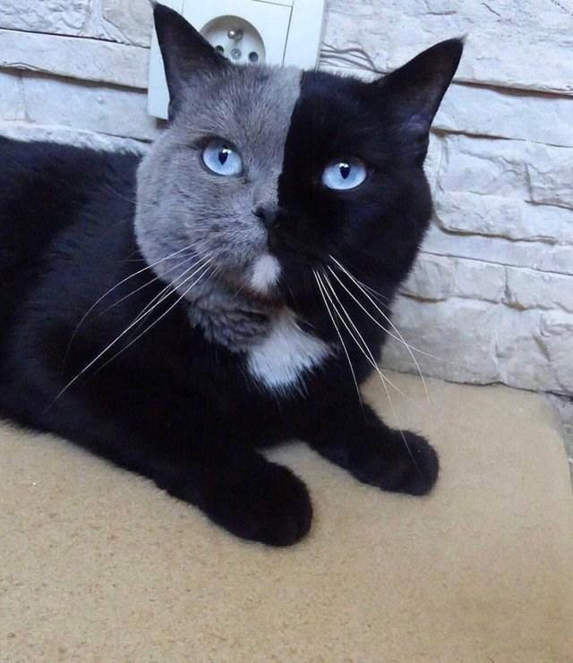 cat gorgeous - 9272163840