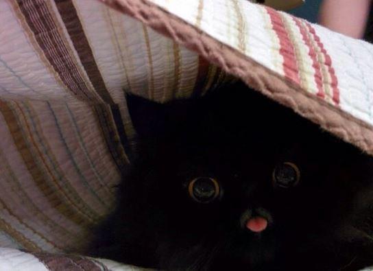 blep - Cat