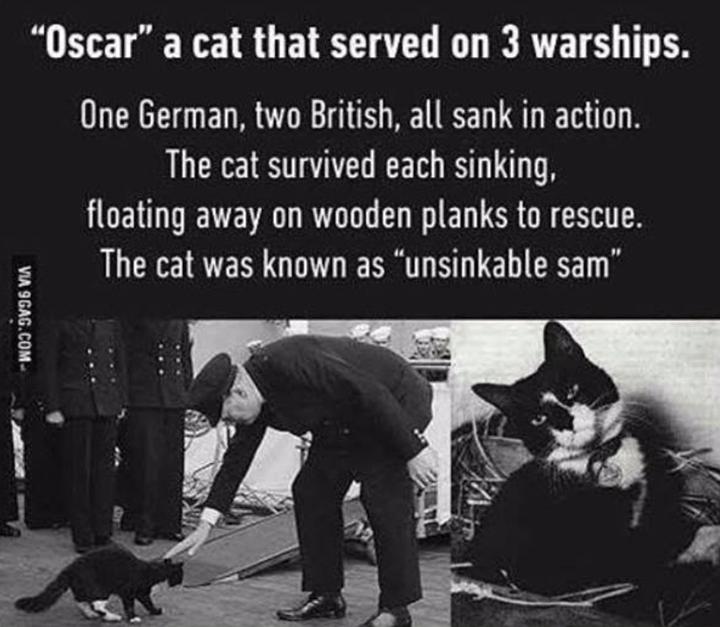 cat history cat meme boat - 9272282112