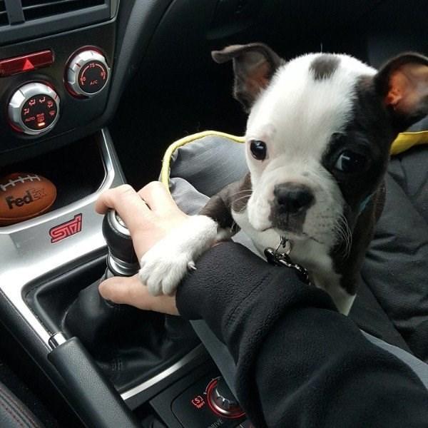 Dog - HIM FedEx STr BIVE