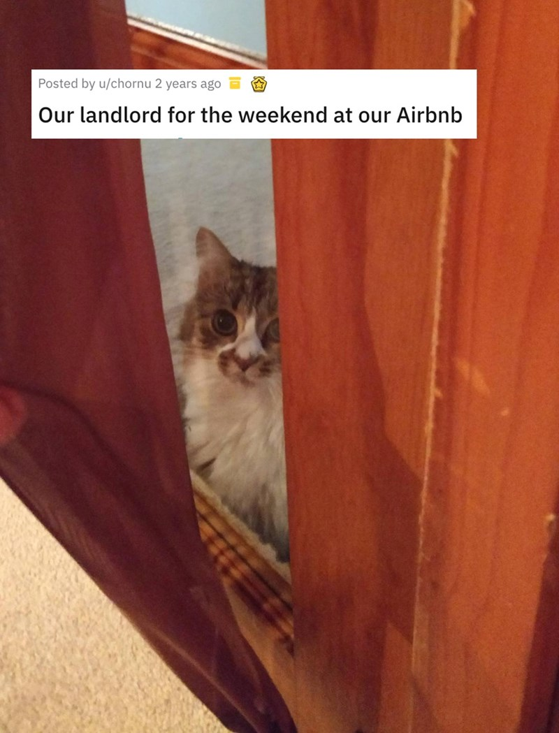 airbnb pet - Cat - Posted by u/chornu 2 years ago Our landlord for the weekend at our Airbnb