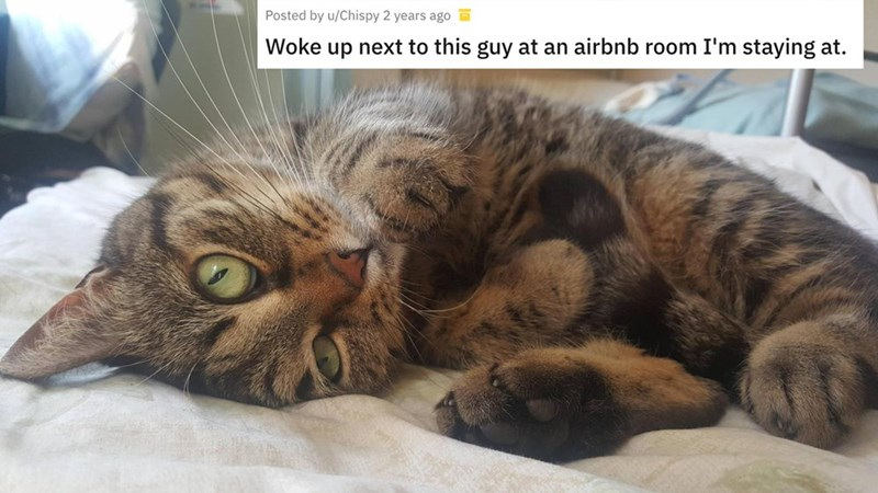 airbnb pet - Cat - Posted by u/Chispy 2 years ago Woke up next to this guy at an airbnb room I'm staying at.