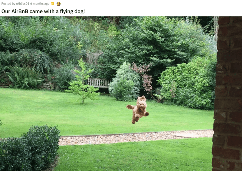 airbnb pet - Lawn - Posted by u/bliss01 6 months ago Our AirBnB came with a flying dog!