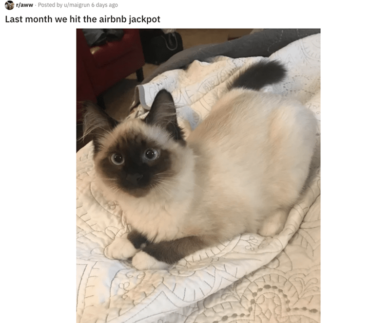 airbnb pet - Cat - r/aww Posted by u/maigrun 6 days ago Last month we hit the airbnb jackpot